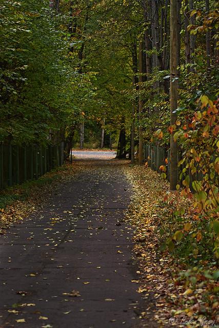 autumn_roads_13