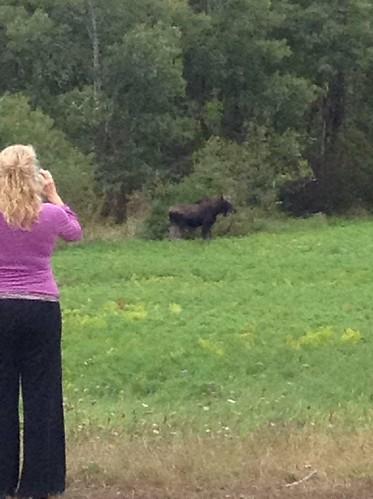 Moose in the Neighborhood