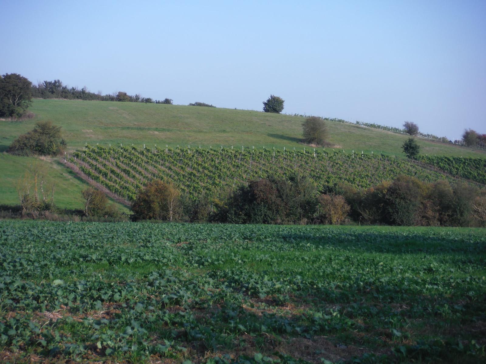 Vineyard, near Hawe's Wood SWC Walk 159 South Woodham Ferrers to North Fambridge