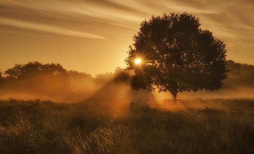 silhouette misty sunrise moody leicestershire sunrays atmospheric bradgatepark dreamylight newtownlinford nikon18105mm nikond7000
