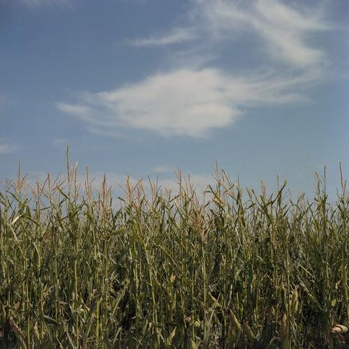 sky tlr film clouds analog rural mediumformat corn colorado co sterling kodakportra160