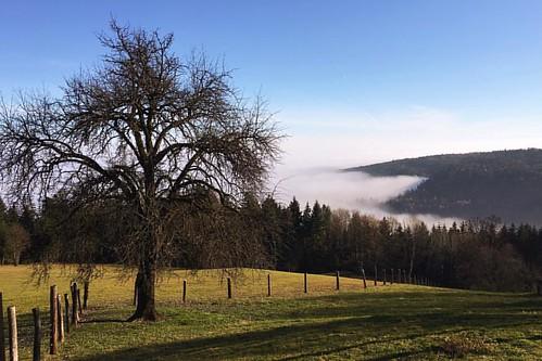 #landscape #fog #iphone6splus #igersgraz #styrianguy