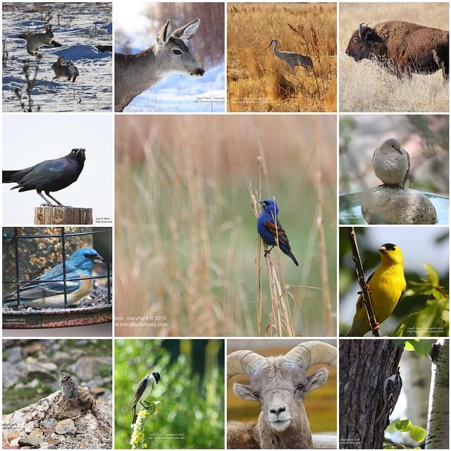 2015 Fauna