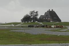 Frisian Islands and German Northsea Coast