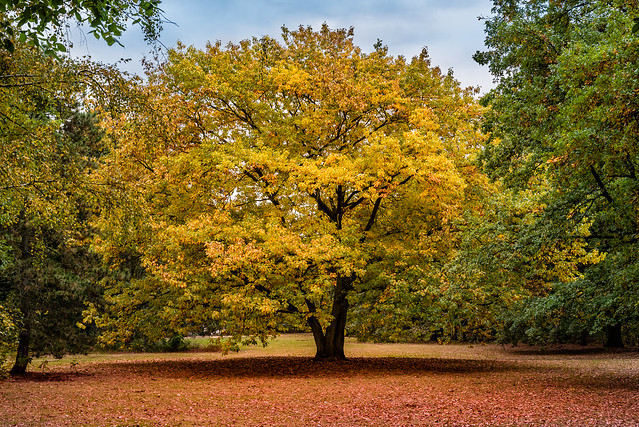 Herbst im großen Tiergarten