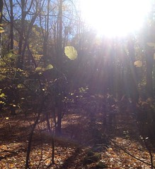 It was so #sunny and #glittery and #leafy out there today. #sleepinggiant #hike #Letterboxing #outandabout #nature