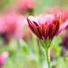 Flowers by mclcbooks