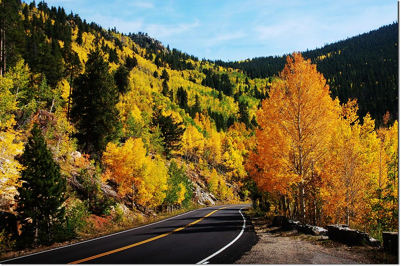 Aspen in Fall, Mount Evans Scenic Byway 5