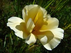 FLEURS - 2012 - FLOWERS.