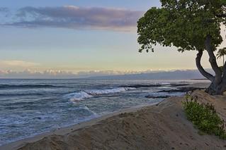A Beach Tree Morning