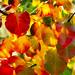leaves16 by mvukovic56