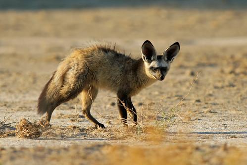 Botswana's Kalahari Desert  Botswana's ...