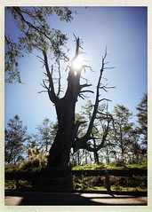 2015_11 塔塔加_夫妻樹 10