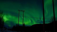 Aurora over Forset