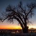 Tree by robert.j.bruner
