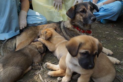 Bear and pups