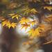 Season of change by Tammy Schild