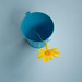 yellow and blue by *Jilltoo