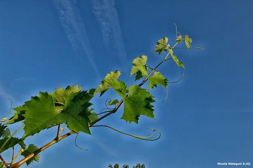 slovenia camper viaggi vino ormoz