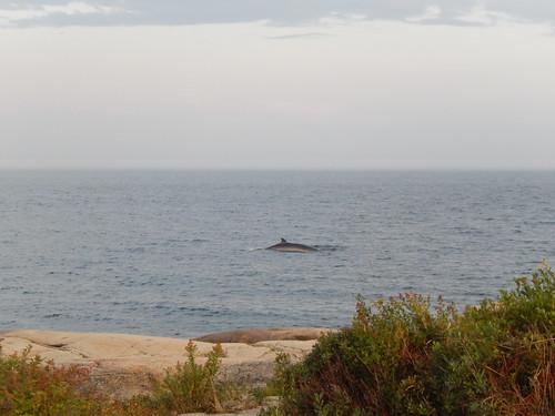 Camping Paradis Marin - walvis vanaf campsite