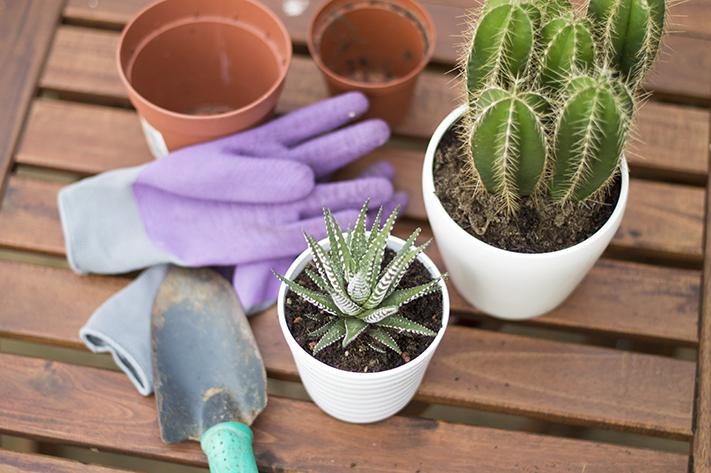 cacti_succulents_gardening