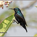 5517 - Loten's sunbird by chandrasekaran a 28lakhs views Thanks to all