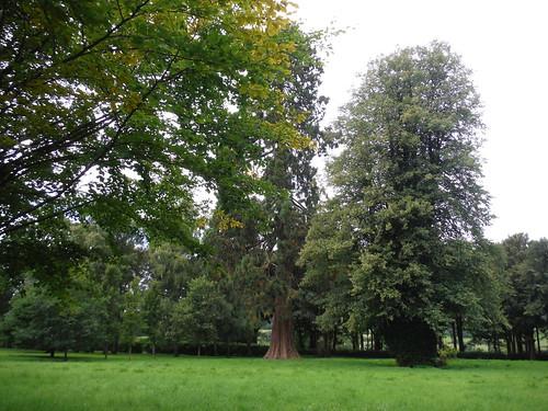 Mature Trees in Wardour Park