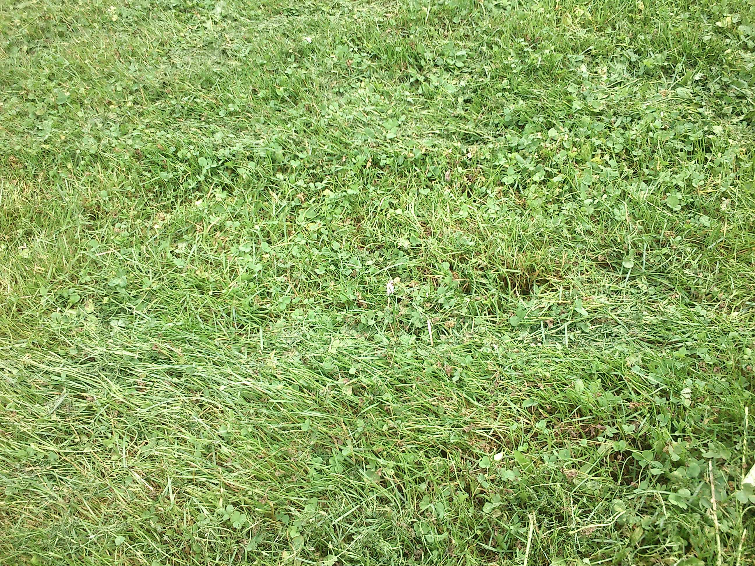 Odeur d'herbe fraîchement tondue