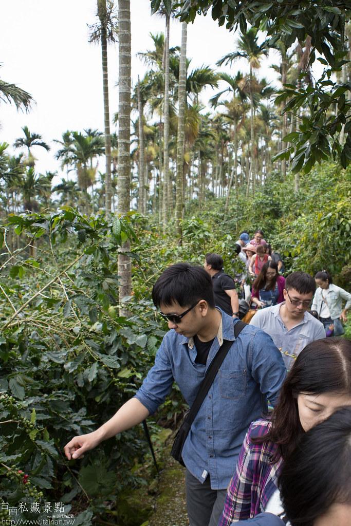 村長咖啡-天池咖啡步道 (11)