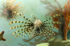 GS Marine Lab Lionfish
