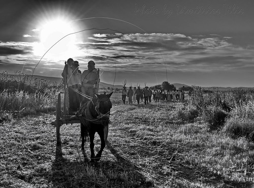 people bw animals sunrise country culture hellas greece tradition rurallife ruralscenes trikala thessaly faneromeni μάναγήμάνακαραγκούνα