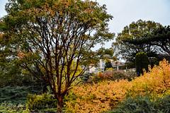 Cambridge Botanic Gardens - Autumn 2015
