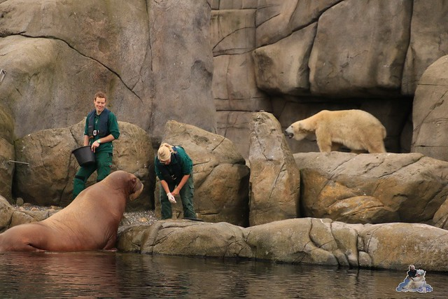Tierpark Hagenbeck 24.10.2015  075
