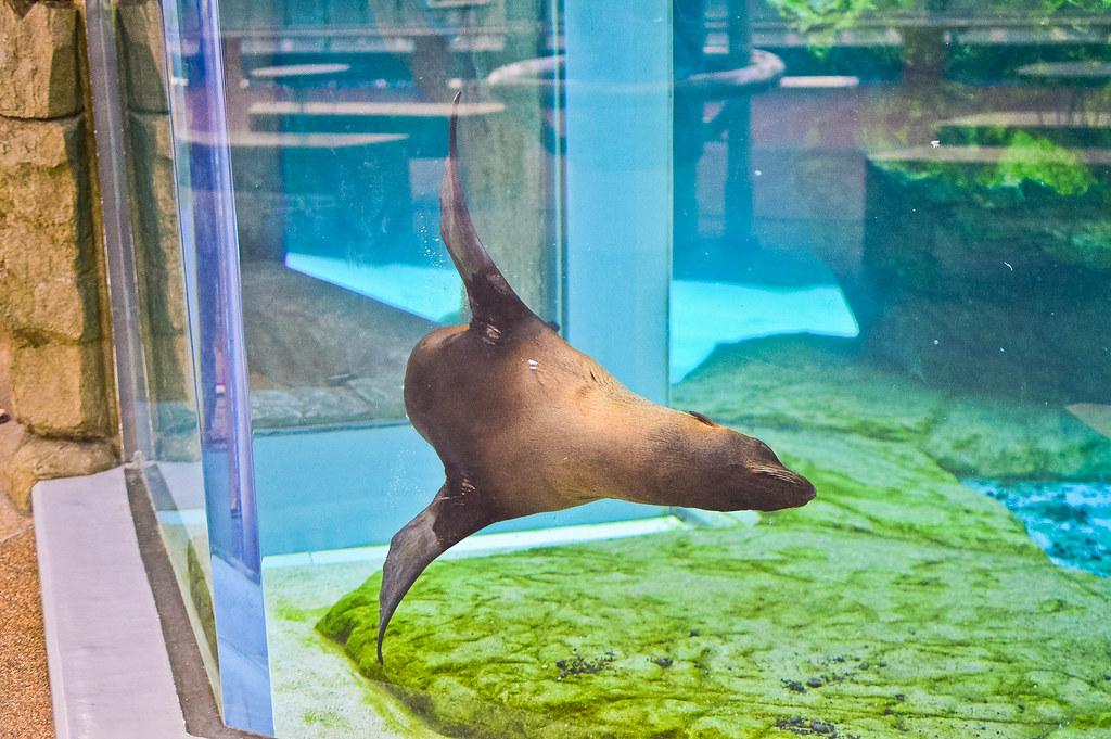 Seal, Kyoto Aquarium