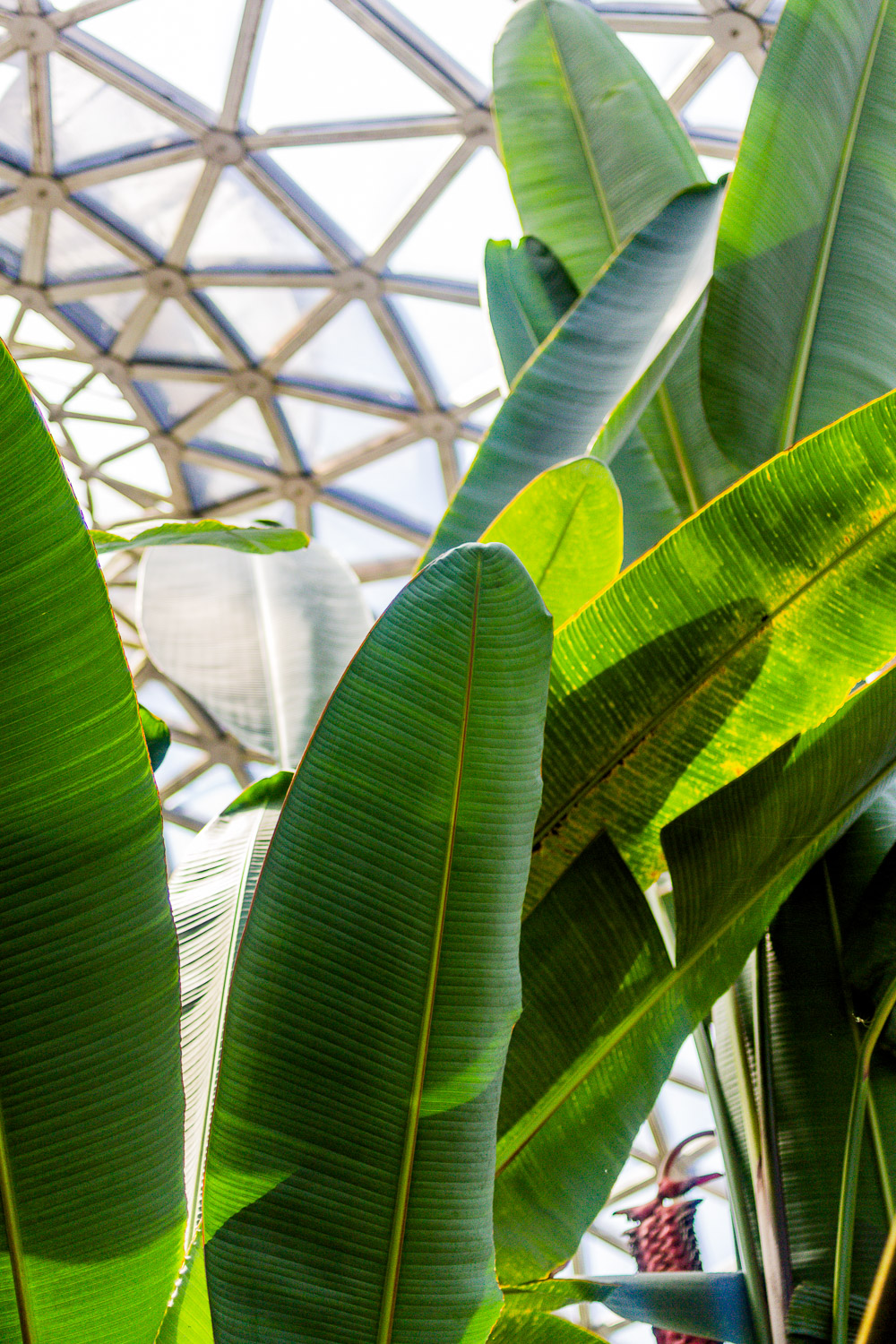 the tropical dome mount coot-tha palm leaves