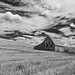 The Palouse 2016 by Megg McNamee