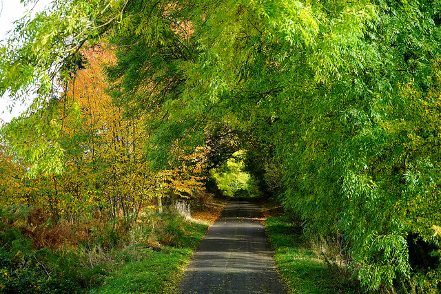 Autumn lane at Clophill, Sony ILCE-7, Sony FE 24-240mm F3.5-6.3 OSS