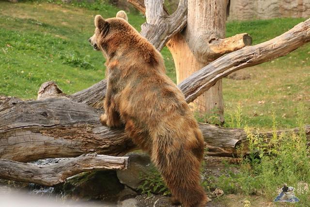 Zoo Berlin 14.08.2015  0109