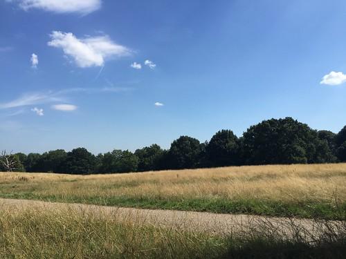 Hampstead heath heatwave august