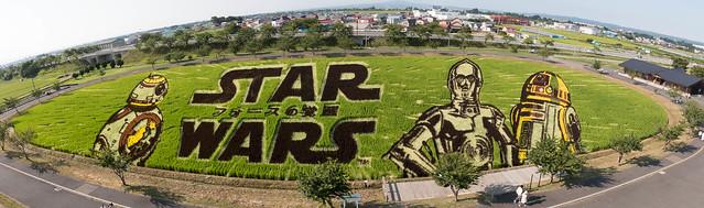 Photo of Star Wars Rice Paddy Art