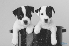 Delta and Echo wish you a happy Monday! They are your cure for the #caseofthemondays! :)  #labrisaphotography #MustLoveDogs #puppies #makewavesmonday #puppiesinapot