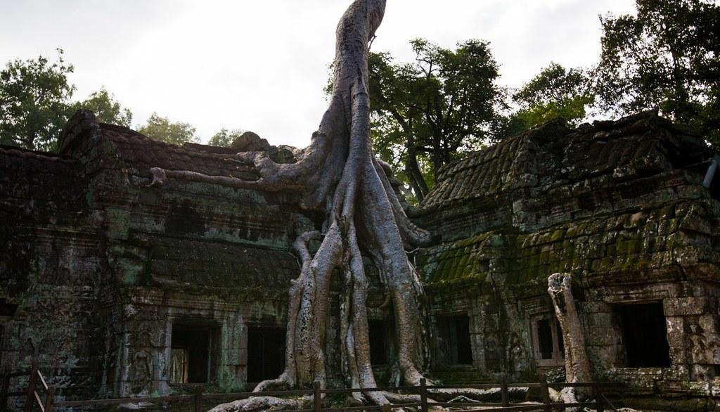 Ta Prohm Angkor-2775