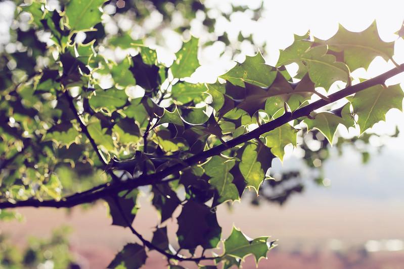 New Forest dog walk, Autumn