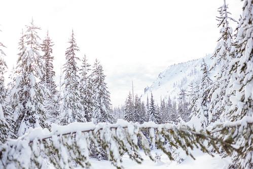 Ray Benson Snow Park-7952