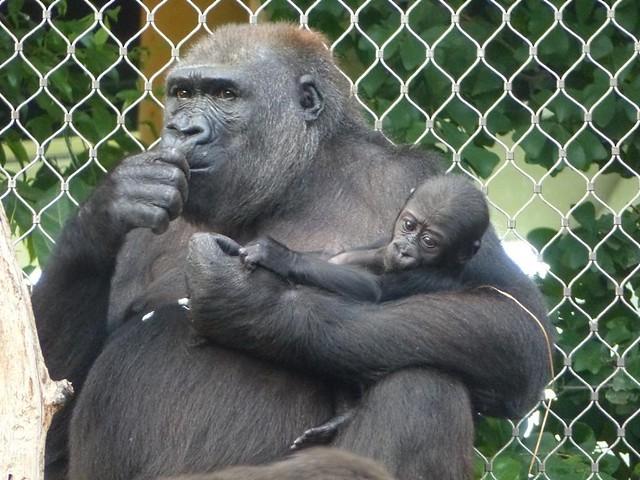 Dian und Vutu, Zoo Frankfurt