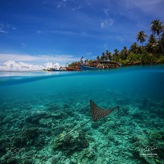 Maldivian Dreams