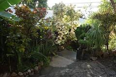 水, 2016-10-26 16:40 - Tree House I