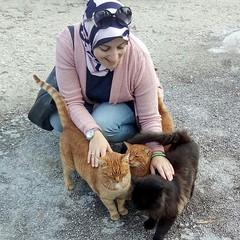 I love #cats #gatti #ig_animals #today #subhanAllah #people