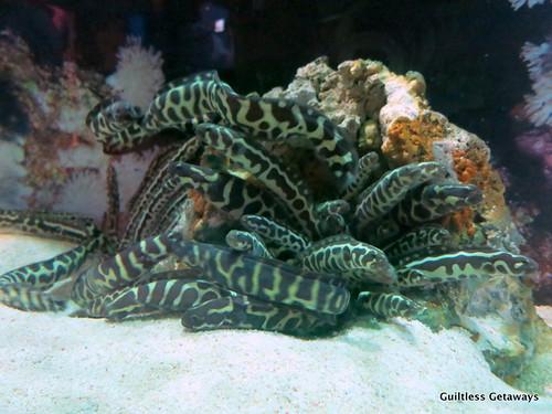 aquarium-busan.jpg