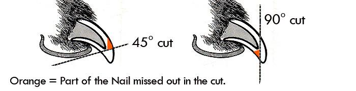 dog-nail-cut-line